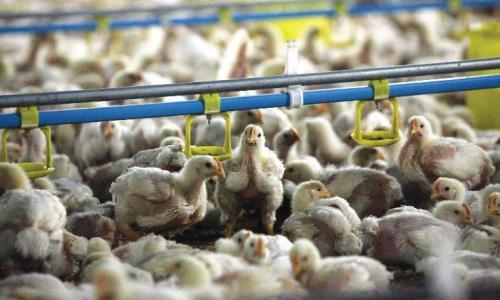 Ngày càng có nhiều doanh nghiệp đến Việt Nam để tìm hiểu về cơ hội giao thương với các đối tác trong lĩnh vực thực phẩm. Ảnh: Đầu tư